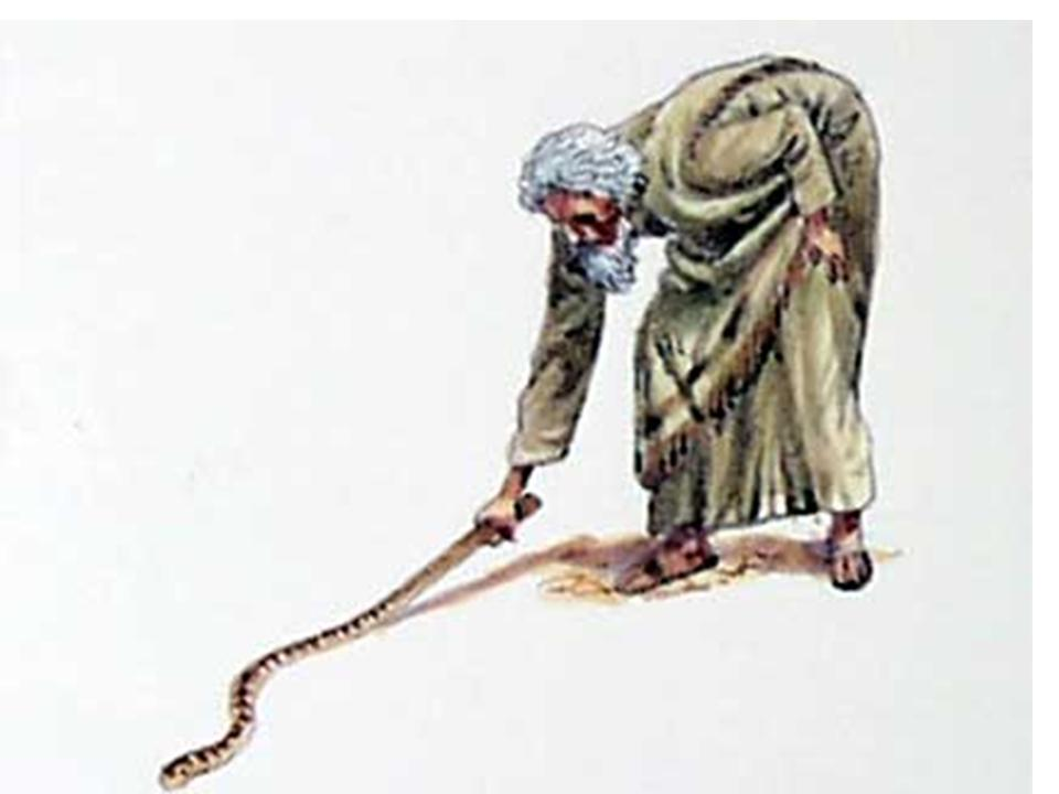 Moses picking up the snake staff